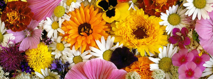 Veja algumas dicas de como montar uma floricultura online