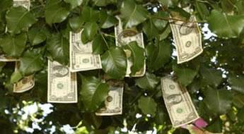 Armadilhas mentais sobre ganhar dinheiro e ser rico